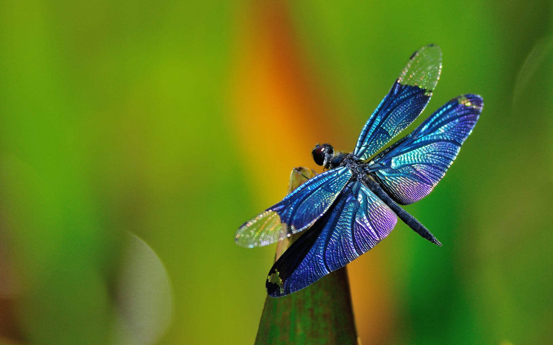 Eyes Of The Dragonfly Inspire Machine Vision on Flowers Cycle