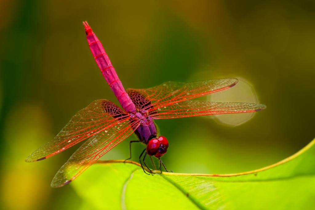 Eyes Of The Dragonfly Inspire Machine Vision